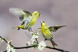 British Birds Colour-4