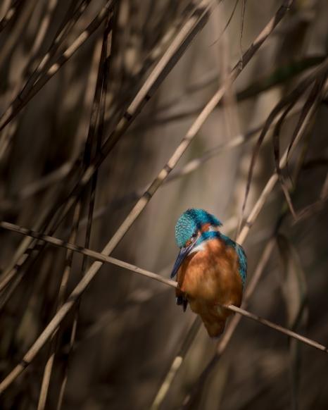 British birds colour-5