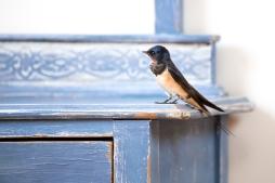 British Birds colour