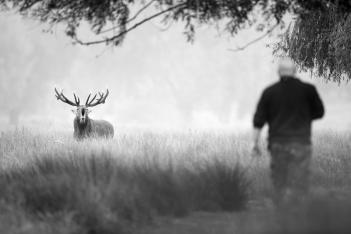 Deer - Bushy Park-2