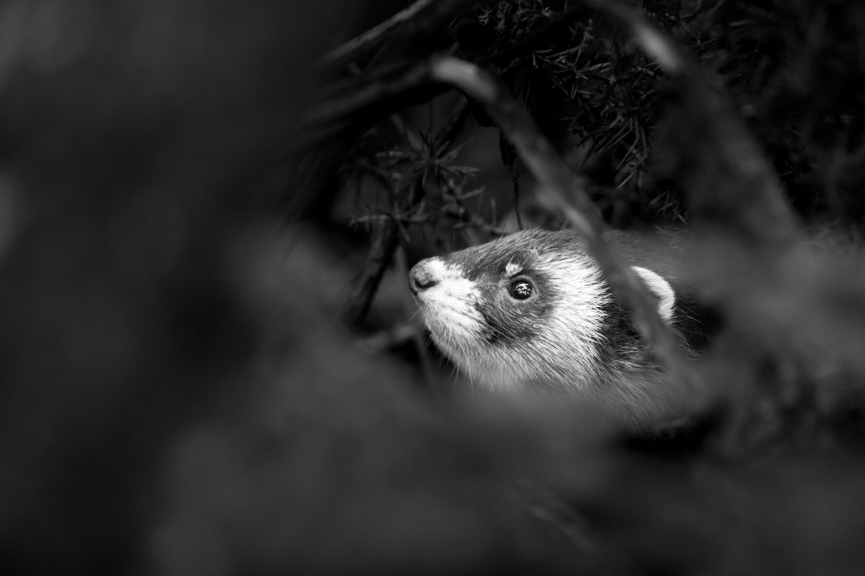 Wildlife photography centre-2