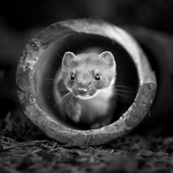 Wildlife photography centre-5