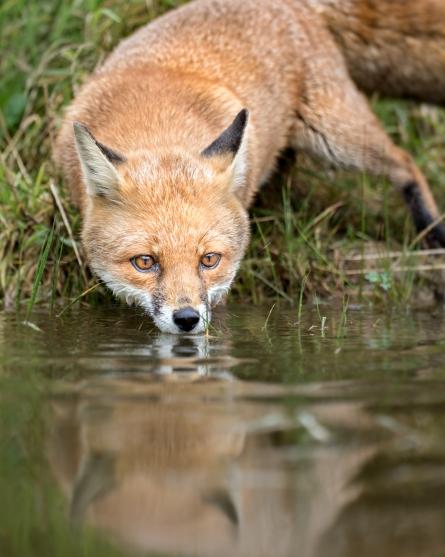 Wildlife photography centre-6