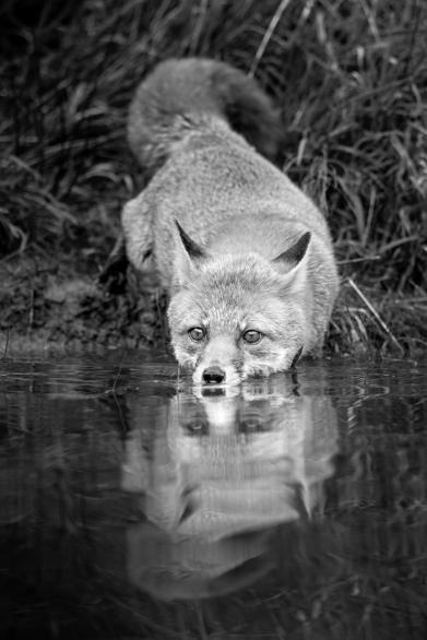 Wildlife photography centre-7