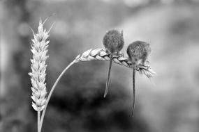 Wildlife photography centre-8